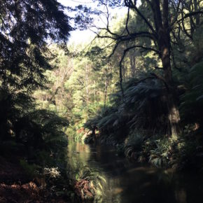 River in the Redwood Forest, The Otways, Great Ocean Road