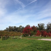 Trees and countryside, Orange Wine Tours