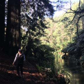 Lady walking along the river in the Redwood Forest, The Otways, Great Ocean Road